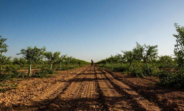 Asesoramiento agrícola Ciudad Real