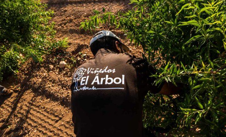 Formación sobre el cultivo del almendro