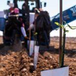 Venta de planta de Almendro Castilla La Mancha