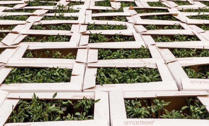 Venta de plantones de Almendro Castilla La Mancha