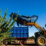 Servicio de recogida de almendras en Castilla La Mancha