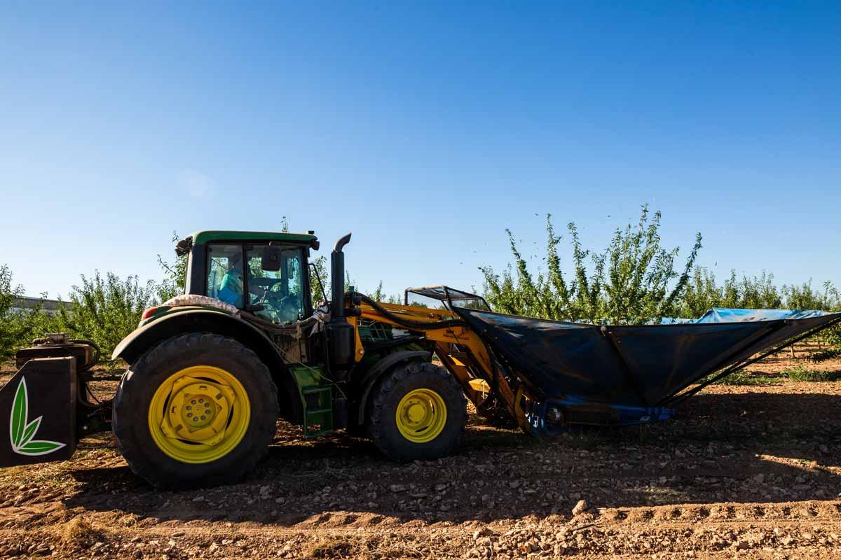 Servicio de recogida de cosecha de almendra