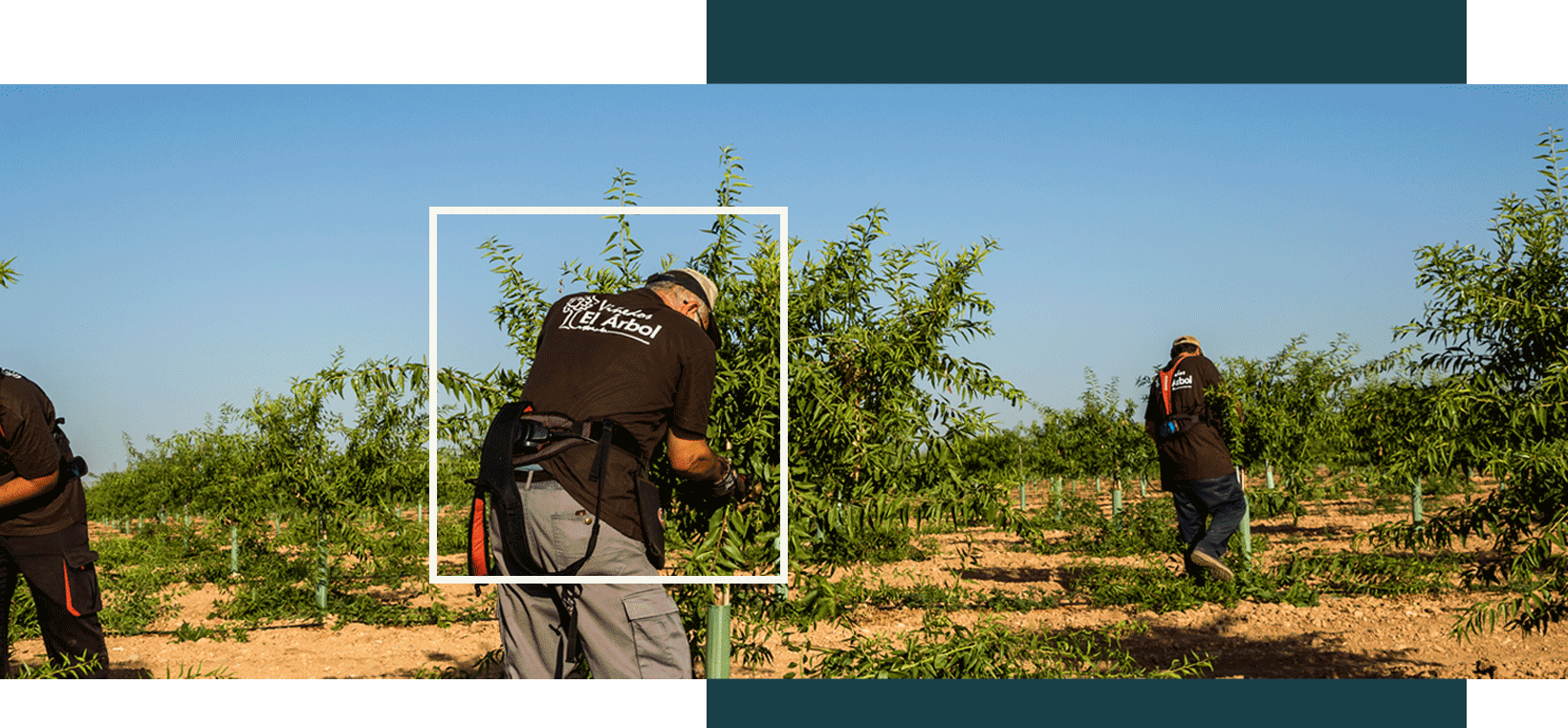 Asesoría agrícola Castilla La Mancha